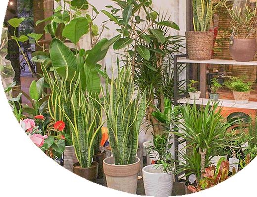 サボテン、観葉植物もございます